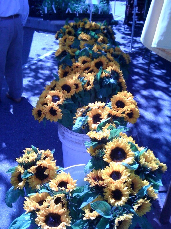 sunflowers farmer's market